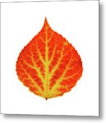 Red And Yellow Aspen Leaf 10 Metal Print