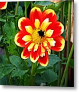 Red And Yellow Flower With Bee Metal Print