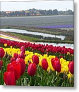 Red And Yellow Tulip Fields Metal Print