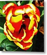 Red And Yellow Tulip Metal Print