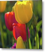 Red And Yellow Tulips Closeup Metal Print