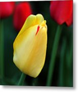 Red And Yellow Tulips Metal Print
