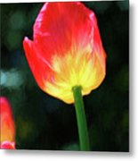 Red And Yellow Tulip - Photopainting Metal Print