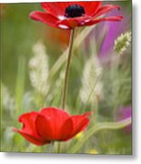 Red Anemone Coronaria In Nature Metal Print