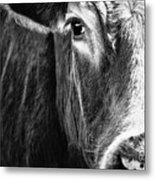 Red Angus In Black And White  Metal Print