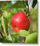 Red Apple On A Tree Metal Print