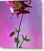 Red Aquilegia 2 Metal Print