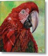 Red  Ara Chloropterus Macaw Metal Print