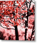 Red Aspen II Metal Print