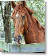 Red At The Fence Metal Print