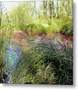 Red Azolla Metal Print
