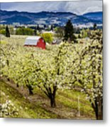Red Barn And The Pear Orchards Metal Print
