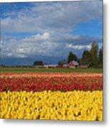 Red Barn Tulip Farm Metal Print