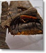 Red Beetle At Twlight Metal Print