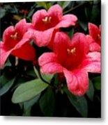 Red Bell Flowers Metal Print