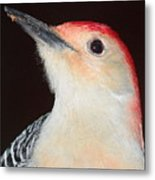 Red-bellied Up Close Metal Print