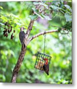 Red-bellied Woodpecker 2016 14 Metal Print