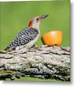 Red-bellied Woodpecker At The Feeder Metal Print