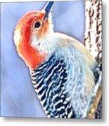 Red Bellied Woodpecker Metal Print