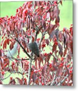 Red Bellied Woodpecker In Dogwood Metal Print by Alan Lenk