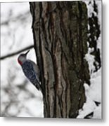 Red Bellied Woodpecker No 1 Metal Print