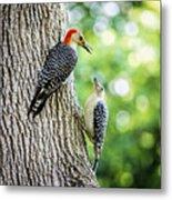Red-bellied Woodpeckers Metal Print