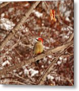 Red Belly Metal Print