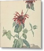 Red Bergamot In A Landscape, Aert Schouman Surroundings Of, C. 1750 - C. 1775 Metal Print