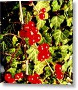 Red Berries And Ivy Metal Print