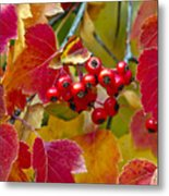 Red Berries Fall Colors Metal Print