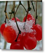 Red Berries In Winter Metal Print