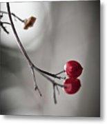 Red Berries Metal Print by Mandy Tabatt