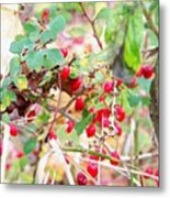 Red Berry New England Metal Print