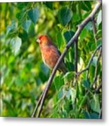 Red Bird Metal Print