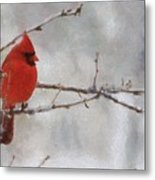 Red Bird Of Winter Metal Print by Jeff Kolker