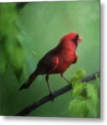 Red Bird On A Hot Day Metal Print