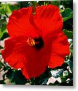 Red Bloomers Metal Print