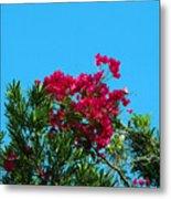Red Bougainvillea Glabra Vine Metal Print
