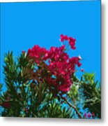 Red Bougainvillea Glabra Vine In Juniperus Virginiana Tree In Co Metal Print