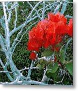 Red Bougainvillea Thorns Metal Print