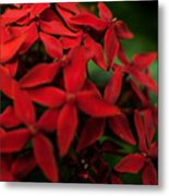 Red Bouquet 7 Metal Print