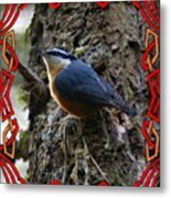 Red Breasted Nuthatch 2 Metal Print