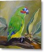 Red Browed Fig Parrot  Metal Print