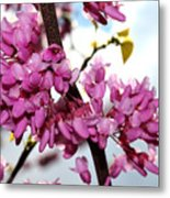Red Bud 2011-1 Metal Print