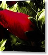 Red Bud On Green Background Metal Print
