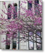 Red Buds And San Antonio City Hall Metal Print