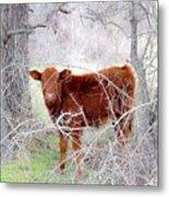 Red Calf In Winter Brush Metal Print