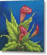 Red Calla Lillies Metal Print