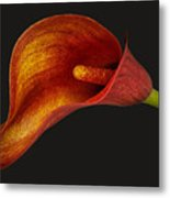 Red Calla Lily Metal Print