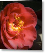 Red Camellia Bloom Metal Print